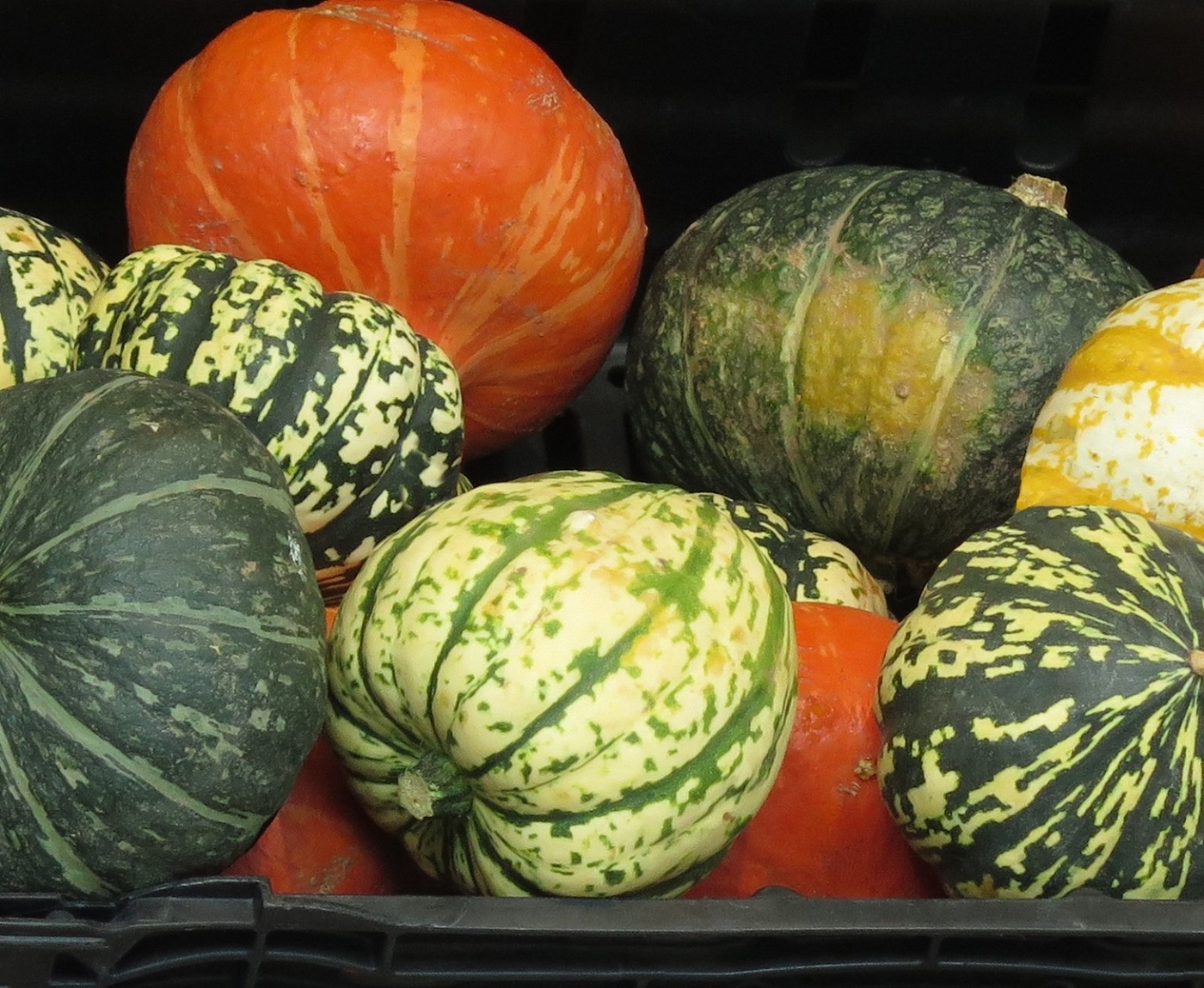 Selection of Squashes