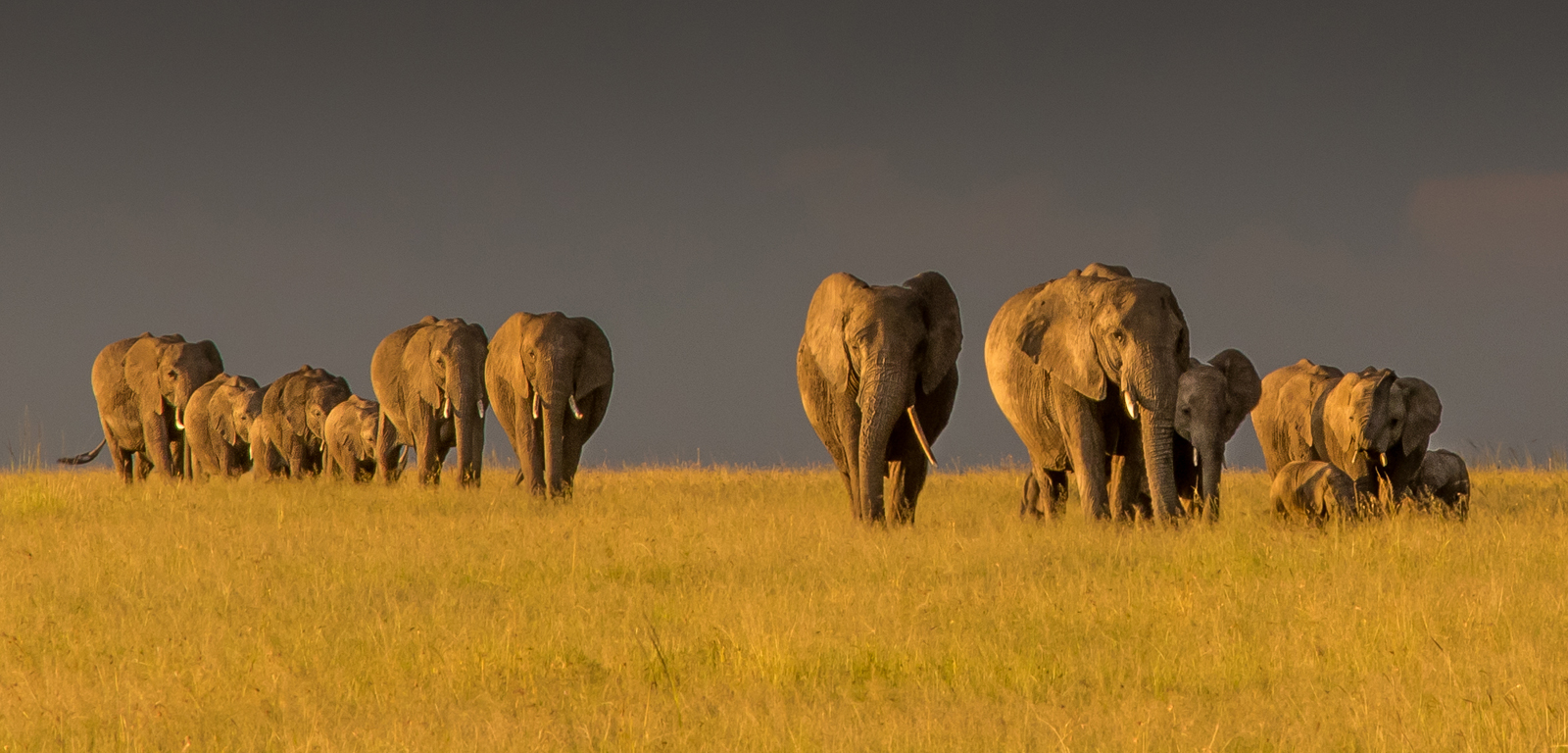 Storm Approaching Elephants Gathering